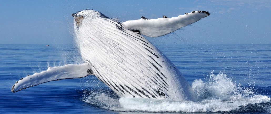 Margaret River Whale Watching
